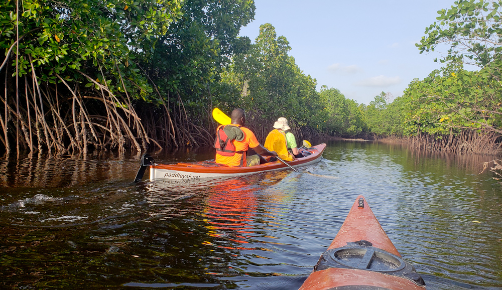 Kayaking through mangrove forest
