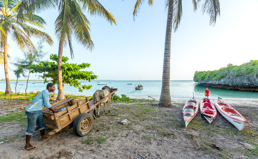 Kayaks on beach with ox cart